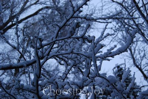 wpid-dsc_0840-2015-02-27-22-44.jpg